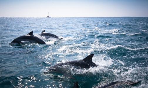 大蓝鲸亲子趣拍加盟优势