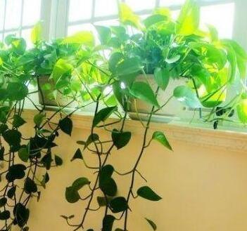 花语缘空气净化