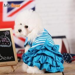 mr.bear宠物