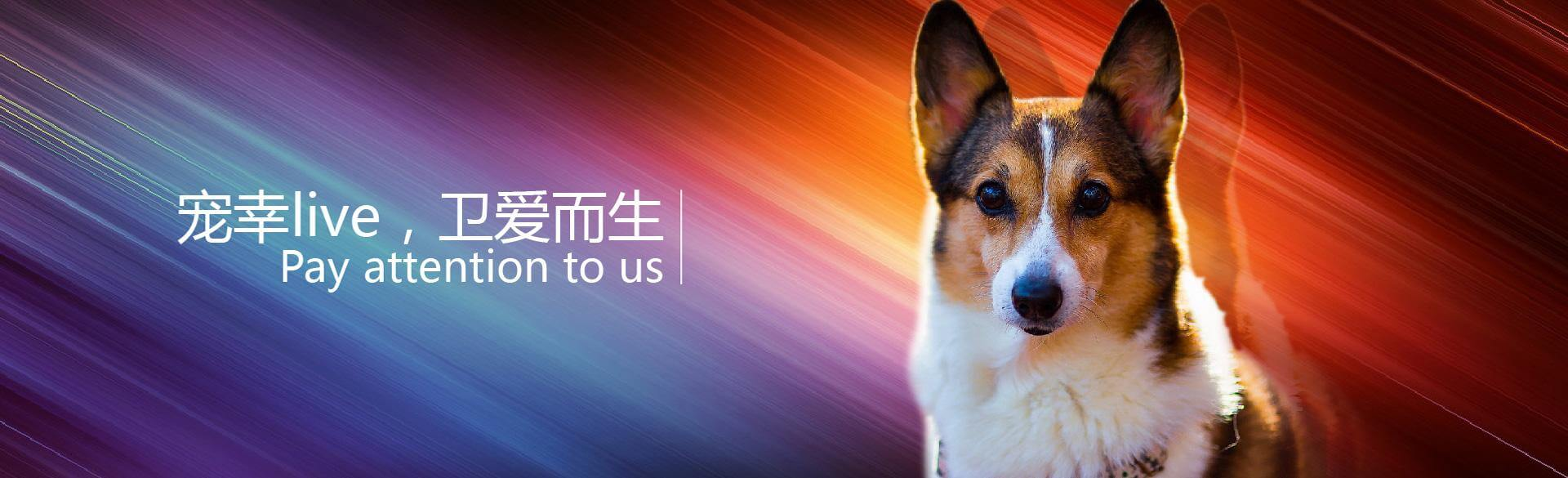 宠幸宠物用品加盟条件